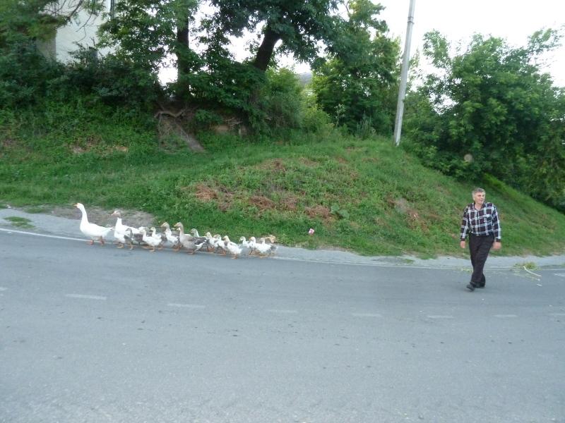 Ukrajina - pastir v Medžubižu