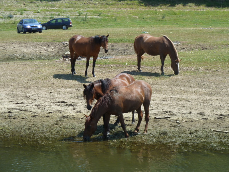 Vzhodna Evropa - konji ob reki Bistriti