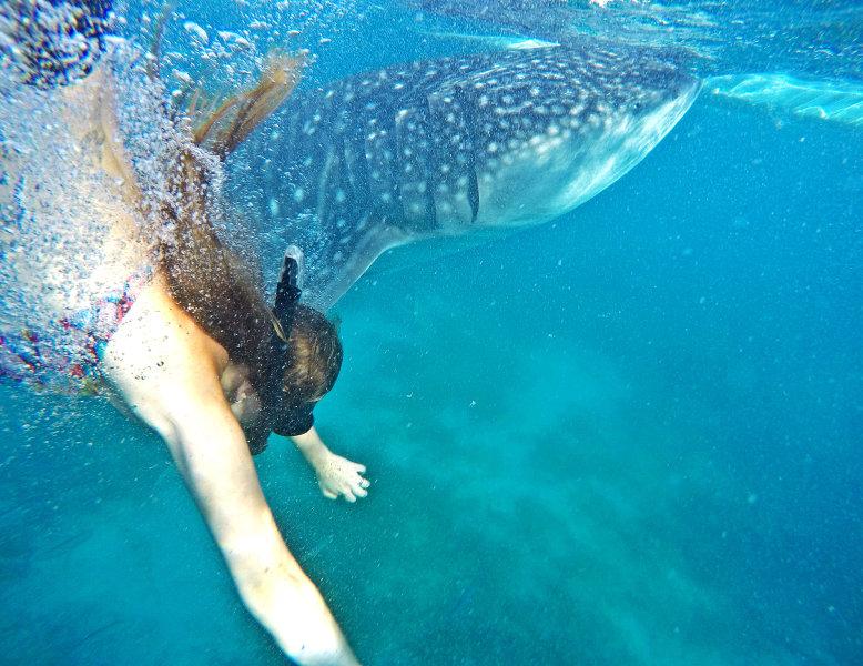 Filipini - morski psi kitovci na otoku Cebu