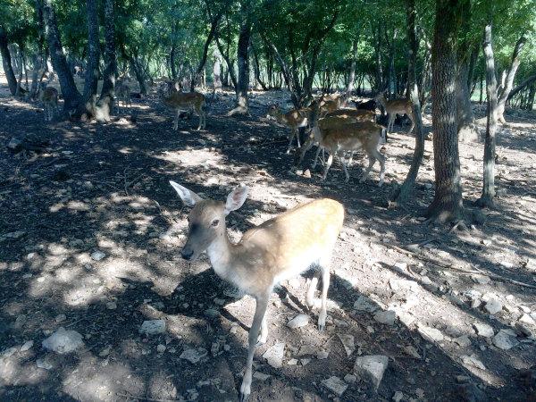 Reportaža Barbariga - živalski vrt