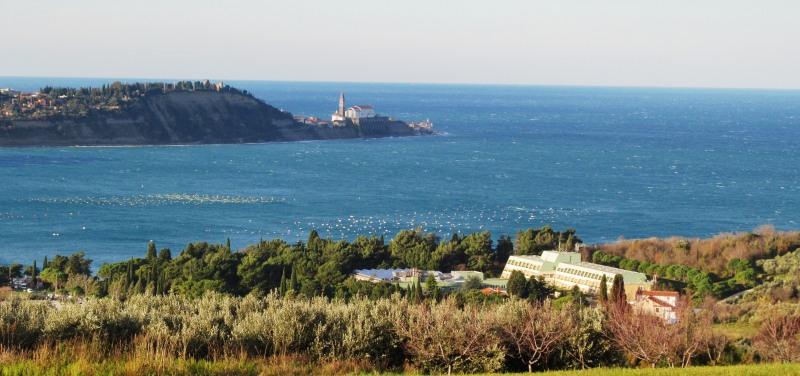 Pogled na kompleks Talaso s Piranom v ozadju (foto: Janez Kolarič)