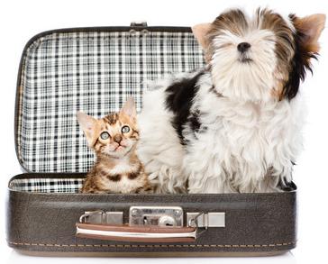 potovanje s hišnim ljubljenčkom