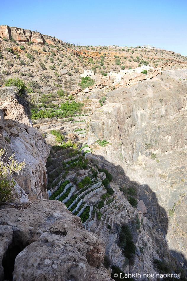 terasasti vrtovi Jebel Akhdar-Oman