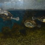 Šibenik - akvarij